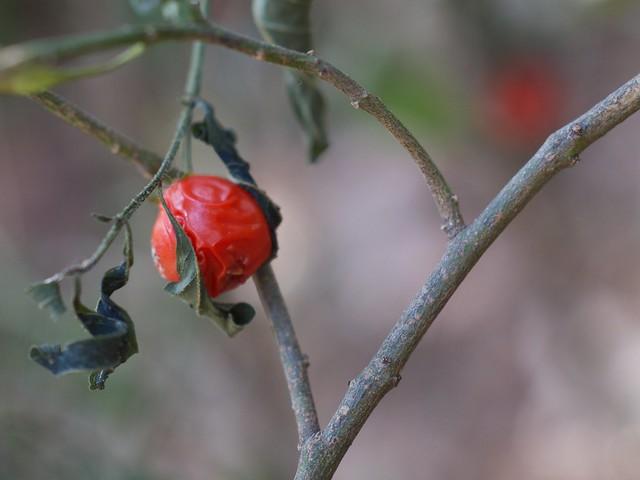 dry berry.