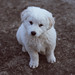 4/52 Puppy by Alis *avec Eva*