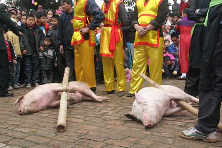 6794337897 c5ca797bd7 Lễ hội Chạy lợn ở Hà Nội Nóng bừng 3 phút mổ lợn khao quân