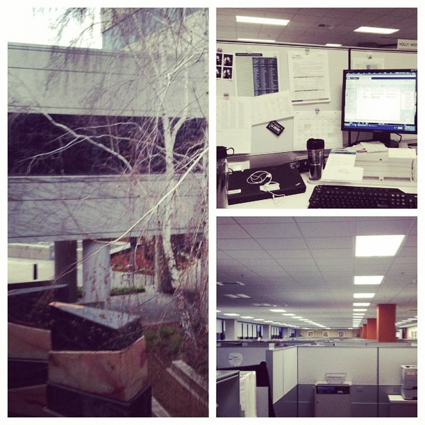 Office//desk//sea of cubicles. My view has a lot of gray today. #febphotoaday