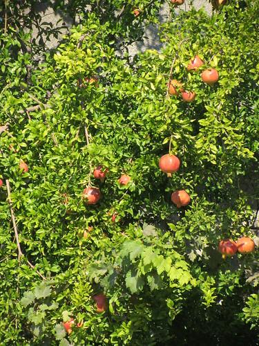 Balikesir: pomegranates