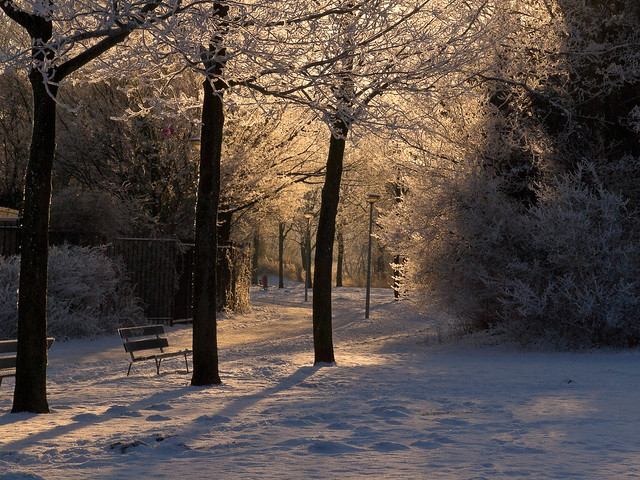 Sunrise Trees with hoar frost