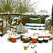 Garden and Plants covered in snow