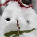 Snow patch man