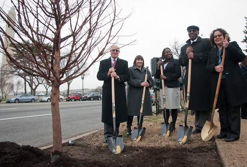 "United States Department of Agriculture (USDA) Under Secretary Natural Resources and Environment Harris Sherman (left), District Department of Transportation Director Terry Bellamy (2nd from right), White House Council on Environmental Quality Chair Nancy Sutley (right) begin to apply a layer of mulch to the freshly planted Dawn Redwood for the Celebration of Tu B'Shevat ""The New Year of the Trees"" event on the District of Columbia western lawn next to the USDA Headquarters, Whitten Building at 14th Street and Independence Ave SW, Washington, D.C. on Wednesday, February 8, 2012. USDA Photo by Lance Cheung."