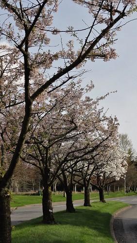 Line of lovely trees
