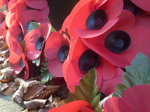 Remembrance Poppies 1