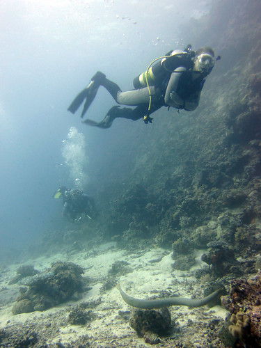 Diving with an olive sea snake in the Great Barrier Reef.