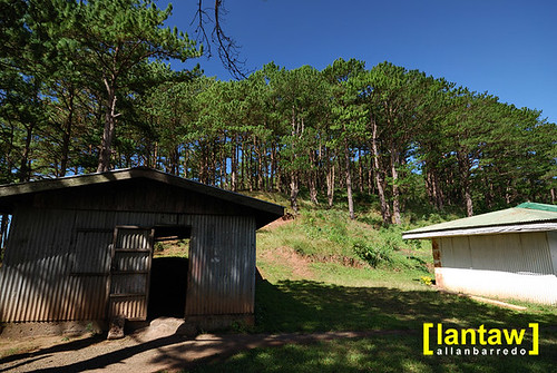 Salacsac Pine Forest 6