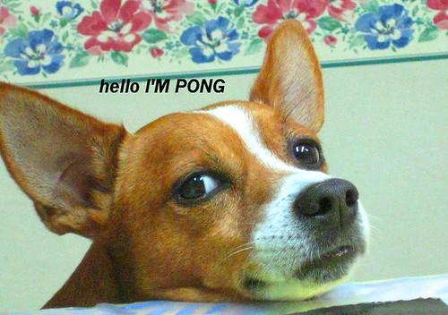 PONG by kuskando