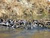 beaver dam 282sm