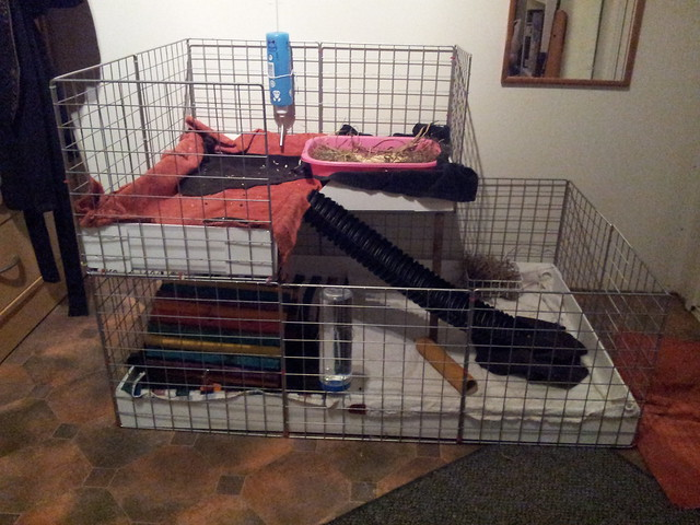 Guinea pig c c cage flickr photo sharing for Making a c c cage