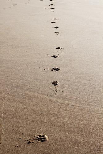 Praia da Amoreira - Algarve