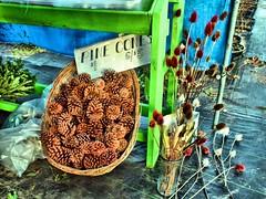 Pinecones at the Christmas Tree Farm