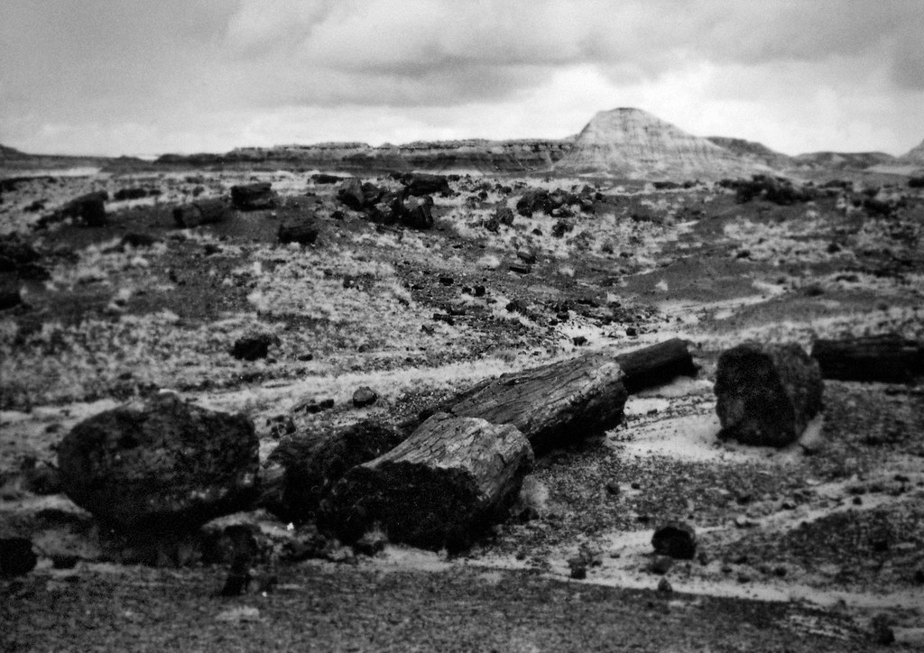 1990, Petrified Forest Logs, Arizona