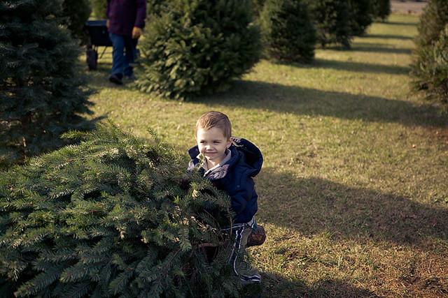 Christmas tree 2011-5