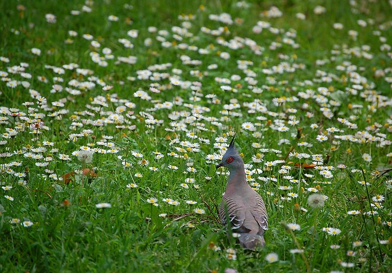 _pigeons_3_