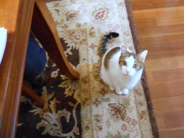 Sam wants Moravian Sugar Cake   Flickr - Photo Sharing!