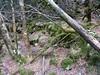 Fin de remontée du bas-Velacu : restes de murets et de sentier ?