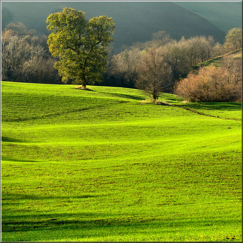 green scenery by Luigi Alesi