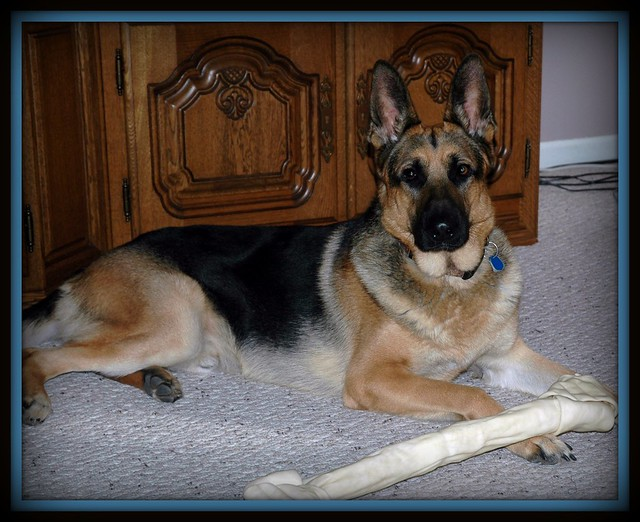 Tripp's Christmas Bone
