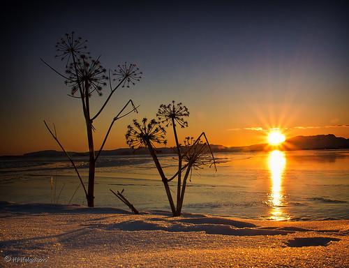 winter sunset snow silhouette iceland soe snjór vetur hvönn sólarlag þingvallavatn a55 angelicaarchangelica supershot sólsetur flickraward hphson sonyslt