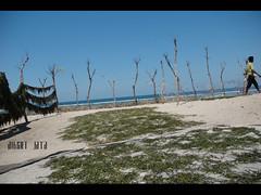 rumput laut sabu10