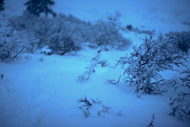 Flora finlandesa bajo el Kaamos