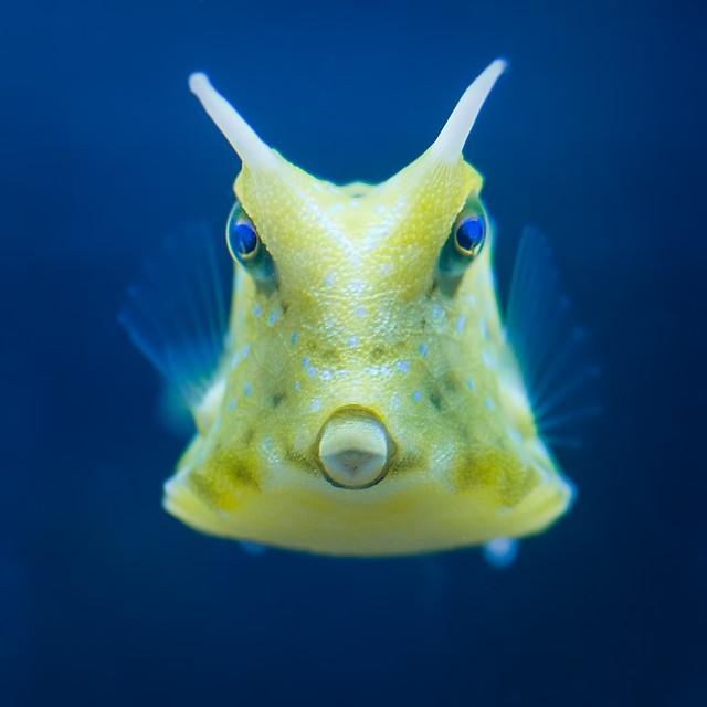 Cowfish Flickr - Photo Sharing!