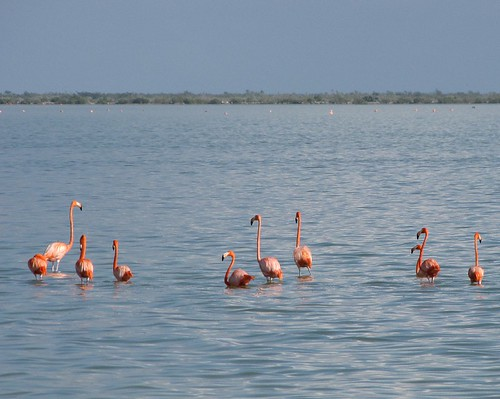 Flamingos! #3 (Inagua: Day 2)