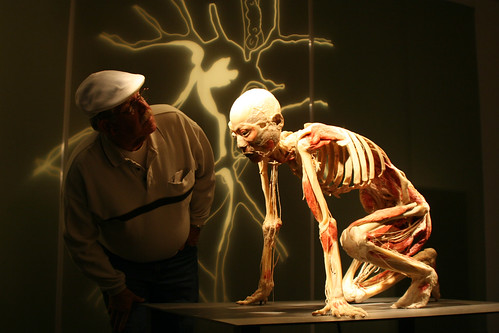 Premier Exhibition's BODIES REVEALED coming to Sci-Port by Karen E. Wissing