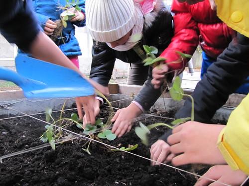 Ricominciamo a coltivare nelle scuole 87