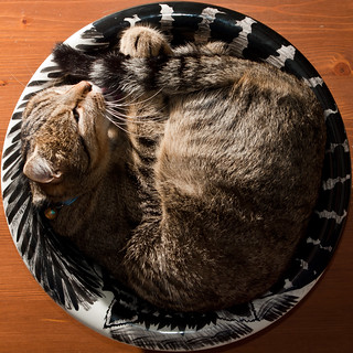 Cat in a Bowl, from above