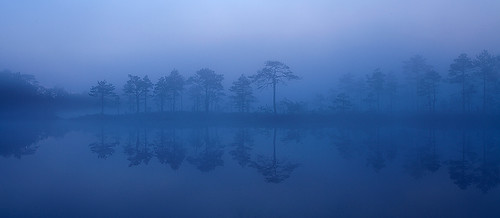morning blue summer sun mist reflection tree colors fog landscape early estonia rise bog