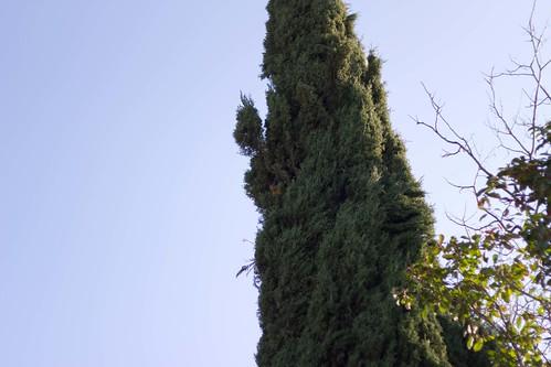 Italian Cypress Villa