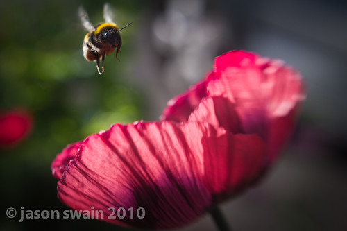 Lensbaby Muse - Bee & Poppy