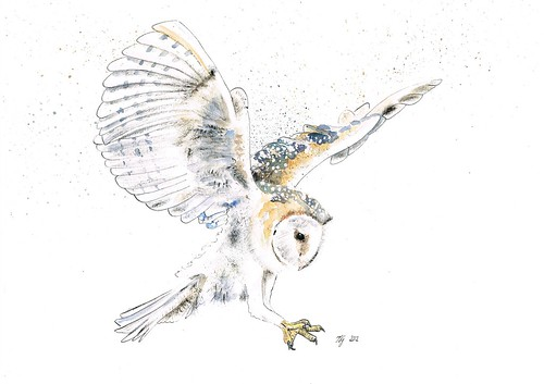 31. Barn Owl by jina11
