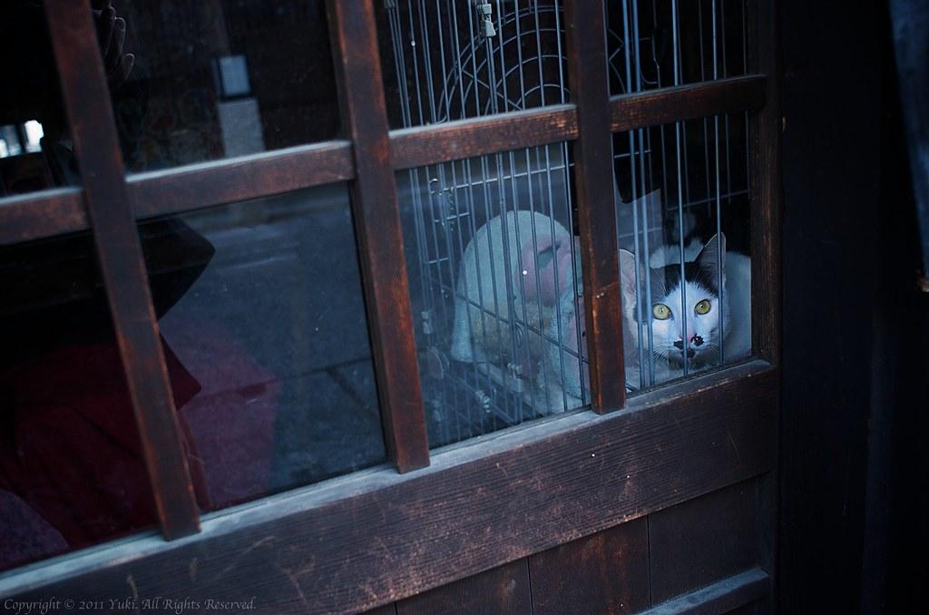 Cat@Okayama #1