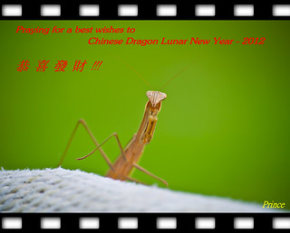 恭賀新禧 + 恭喜發財 - Welcome for Chinese Dragon Lunar New Year - 2012