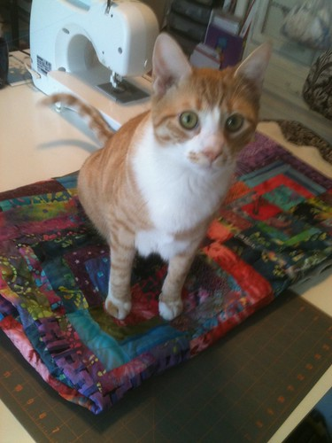 Ozzie tests dad's quilt and gives it a paws up