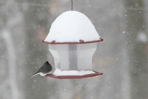 Bird on Snowy Bird Feeder