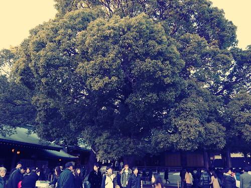 明治神宮の大樹