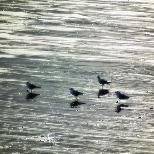 blurry birds by moclaydon