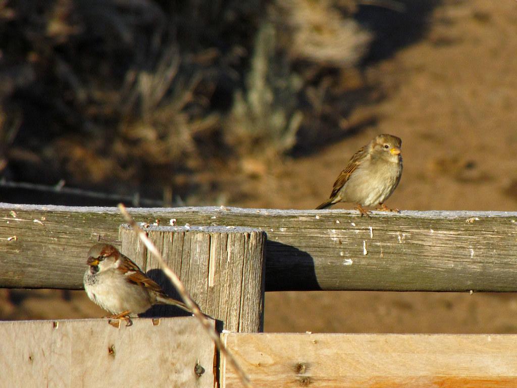 Mornin' Fence Sittin'
