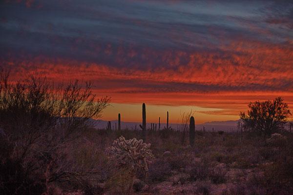 Sonoran Desert Twilight