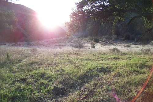 Ant Meadow Morning