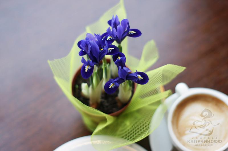 Ирисы цветы в домашних условиях