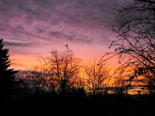 trees clouds sunrise scenery bc britishcolumbia langley fraservalley lowermainland