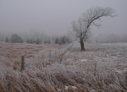 leica snow cold tree grass fog fence landscape haze frost country foggy meadow atmosphere scene pasture fencing posts mn damp frosted frostline hoarsfrost dllux4 henneoincounty