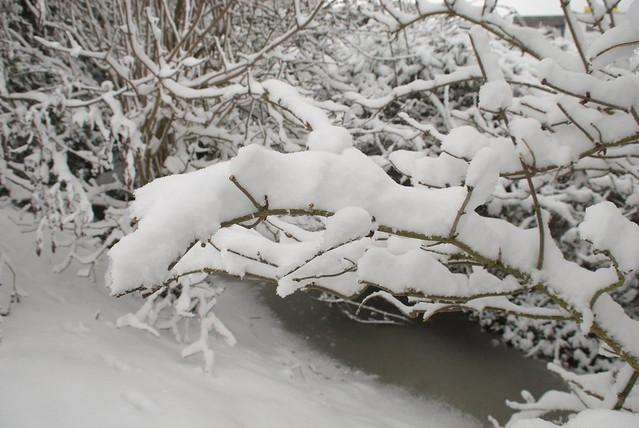 snow in rye DSC_3263_1